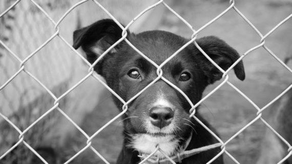 Impedire le violenze contro gli animali: una questione di equilibrio, intelligenza e buon senso