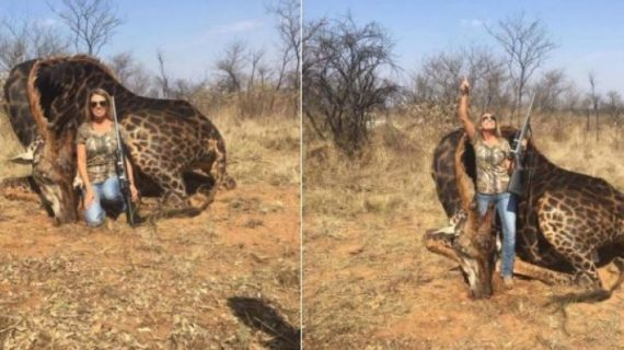 Cacciatrice si vanta di aver ucciso giraffa: insulti e indignazione sui social.