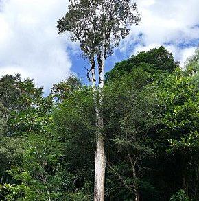 """Il caso dello strano albero che """"sanguina"""" metallo."""