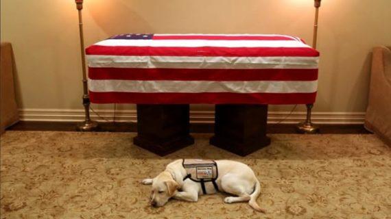 Morto il Presidente Bush e Sully il suo cane, veglia su di lui: la foto è virale.
