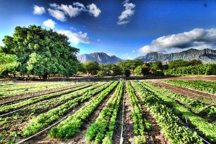 Ancora nessun fondo europeo per i coltivatori biologici in Calabria !