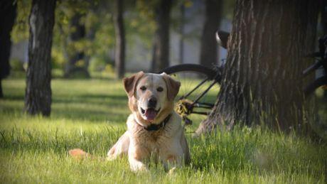Da una ricerca scientifica: i cani captano i tumori nel sangue dell'uomo con una precisione del 97 per cento.