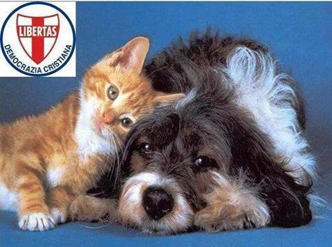 Il ruolo insostituibile del volontariato nell'ambito della protezione animali !